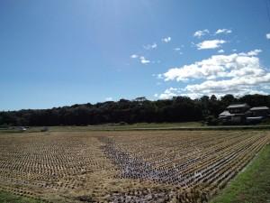 稲刈りの済んだ田んぼ