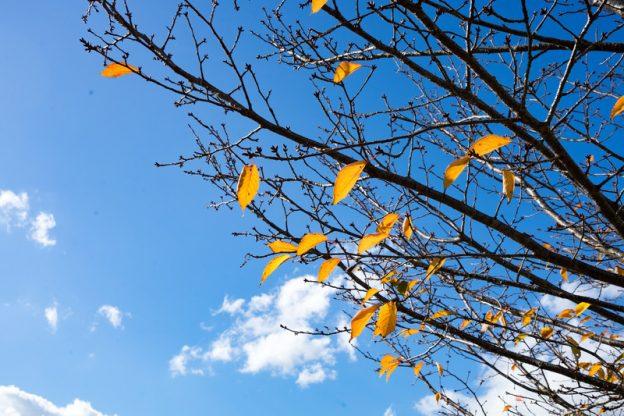 (C)ELFA ぱくたそ「枝の残る紅葉と青空」(フリー素材)