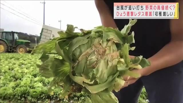 高値続く野菜 長雨、ひょうに…台風が追い打ちか